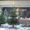 Page link: Christmas in Beeston