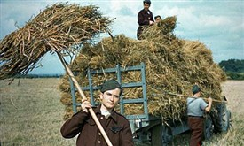 Photo:German POWs making hay while the sun shines