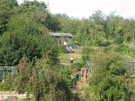 Photo: Illustrative image for the 'St Ann's Allotments Open Day' page
