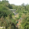 St Ann's Allotments Open Day