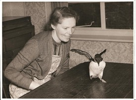Photo: Illustrative image for the 'MORE on 'Tussy', the Wollaton Puffin' page