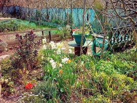 Photo:Another allotment