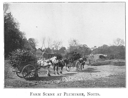 Photo: Illustrative image for the 'Farming at Plumtree in 1900' page